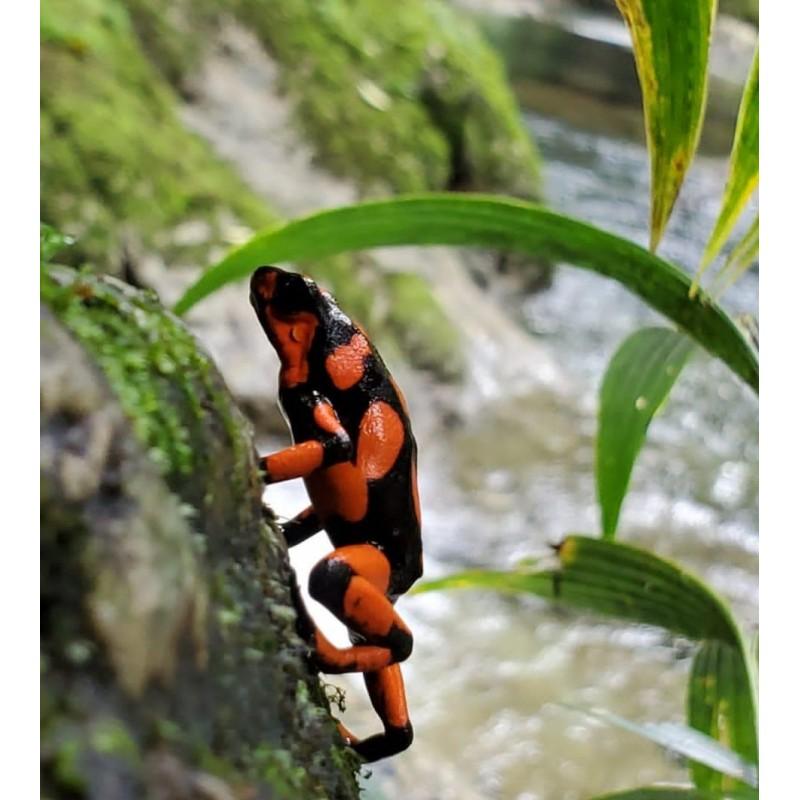 selva-mojada-nuqui-choco.jpg
